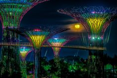 """IN PICTURES: Man Made """"Supertrees"""" in Gardens by the Bay (Singapore)"""