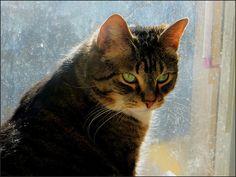 cat Shorty