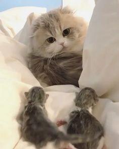 "5,545 Me gusta, 96 comentarios - cat kitten cute (@catsprestige) en Instagram: ""A father with his kids ❤️ . . . By @utamaruru ."""
