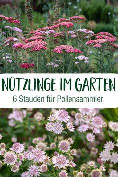 Container Gardening Vegetables, Vegetable Garden, Balcony Garden, Garden Plants, Garden Theme, Green Life, Garden Inspiration, Greenery, Herbalism