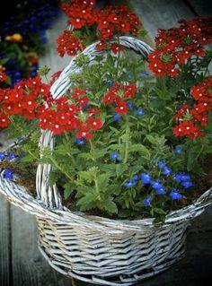 赤と青、一見組み合わせが難しそうな花でも、白いバスケットでまとめられることで愛らしい印象になっています。