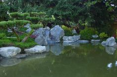 Image may contain: plant, tree, outdoor, nature and water Garden Forum, Garden Images, Beautiful Space, Over The Years, Pond, Backdrops, Japanese, Water, Plants