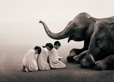 Reading to an elephant. Ashes and Snow | Magical Animal Photography By Gregory Colbert