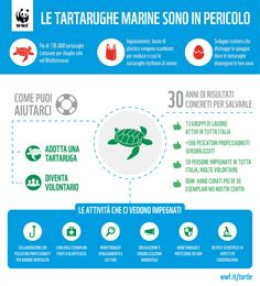 Le tartarughe marine, che abitano i nostri oceani da sempre, rischiano ora di scomparire. Per saperne di più http://www.wwf.it/tartarugamarina/