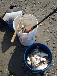 1000 images about surf fishing pics general on for Surf perch fishing oregon