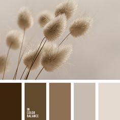 monochrome color palette palettes with color ideas for decoration your house, wedding, hair or even nails. Design Seeds, Colour Pallette, Color Combos, Brown Color Schemes, Monochrome Color, Monochromatic Color Scheme, Pastel Palette, Color Balance, Pantone