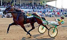 I Luv The Nitelife - September Horse of the Month fresh from her two-heat world record performance in the Jugette at Delaware, Ohio, continues her bid for Horse of the Year in the Breeders Crown Three Year Old Filly Pace at Pocono Downs on Saturday, October 19th