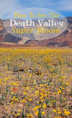 Read about what it's like to visit the once-per-decade Super Bloom in Death Valley.