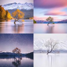 A tree on Lake Wanaka in New Zealand photographed at different times of the year - RandomOverload Abstract Landscape, Landscape Paintings, Acrylic Paintings, Landscapes, Landscape Photography Tips, Nature Photography, Wanaka New Zealand, Lake Wanaka, One Word Art