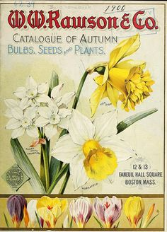 1900 catalogue
