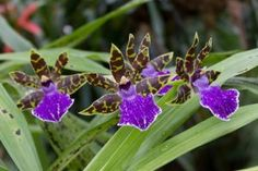 30+ Different Types of Orchids with Pictures