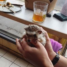 There was some strong competition but 'cutest customer of the day' goes to Yoss the hedgehog.