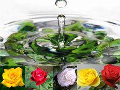 Falando de Magia e mais...: Banhos de ervas e flores: Em que dias e horários devo tomar? http://dicasmagiaserituais.blogspot.com.br/