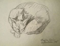 Pisica din Flogita