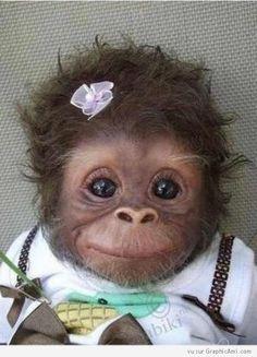 Ce petit singe est habillé.