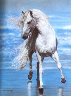 Andalusian Horse (Equus caballus) ; Image ONLY