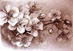 cherry blossom - Pesquisa Google