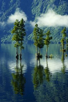 Trees in a crystal clear Mountain Lake.☁