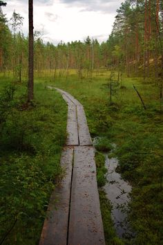 National park in Finland Forest Path, Meadow Flowers, Fantasy Places, Life Is A Journey, Source Of Inspiration, Pathways, Beautiful World, Places To See, Cool Pictures