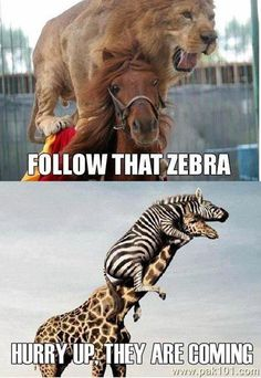 Top 30 Most Funniest and Humorous Animal Pictures   Just Laughs Fun and Humor