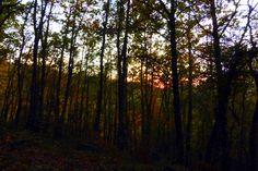El sol se despide y en el bosque todo se torna silencio
