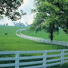 Iconic white fence on rolling hill at Kentucky horse farm