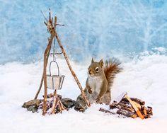 Fotógrafa esconde nozes pela casa e registra esquilos em situações divertidas
