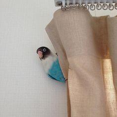 My blue bird ! #bird #parakeet #bon #torimizuki