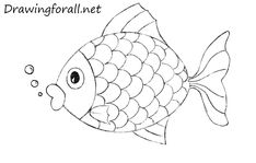 How to Draw a Fish for Kids | Drawingforall.net