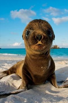 Vacations That Will Change Your Life: Cruising the Galapagos Islands | http://Coastalliving.com