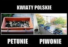 Funny Mems, A Funny, Polish Memes, Daily Memes, Pokemon Go, I Am Awesome, Funny Pictures, Jokes, Fandoms
