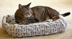 Knitting for pets...Cat Knitting Patterns: 40 Winks Basket from Interweave Knits Weekend 2009