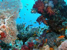 Red Sea; Sharm el-Sheikh, Egypt