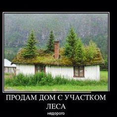 Построим сруб не только в городе но и в лесу💪💪💪👌👌👌#лес#сруб#дом#юмор#природа#экология#здоровье#тишина#покой#чиствыйвоздух