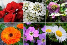 As melhores flores para um jardim de Inverno e como as cultivar