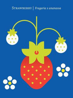 Fruit: Strawberry - A gallery-quality graphic design art print by Christopher Dina for sale. Food Illustrations, Illustration Art, Strawberry Art, Strawberry Summer, Cute Poster, You Draw, Fruit Art, Modern Art Prints, Grafik Design