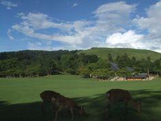 奈良公園で知性と食欲を満たす | 奈良県 | Travel.jp【たびねす】