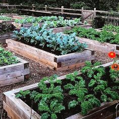Don't these raised beds look great and they are easier to maintain and super productive garden additions. You would be amazed at how much… Raised Garden Beds, Raised Beds, Herb Garden, Vegetable Garden, Crate Ideas, Container Vegetables, Apple Crates, Garden Design, House Design