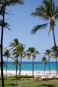 Admire the gorgeous palm trees and turquoise waters when you visit #Hawaii.