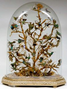 """Mixed case of taxidermy humming birds."""