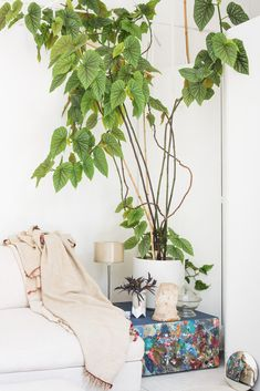 Greenterior, a new book by the founders of Antwerp's Coffeeklatch, looks at designers and artists' homes through the lens of their abundant houseplants. Small Plants, Indoor Plants, Potted Plants, Easy House Plants, Living Room Plants, Apartment Plants, Botanical Decor, Houseplants, Interior Inspiration
