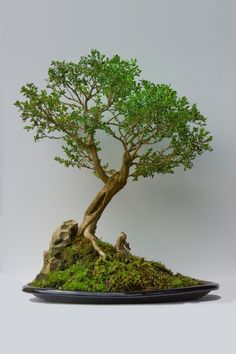 Watering your bonsai correctly is the most essential skill to master to guarantee a nutritious plant. In the event the Bonsai dies it can be quite a traumatic experience that could be likened to having your family dog die. Bonsai Plants, Bonsai Garden, Cactus Plants, Ikebana, Diy Plante, Bonsai Tree Care, Bonsai Styles, Mini Bonsai, Inside Plants