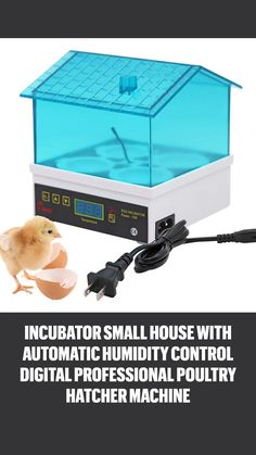 Small Chicken Coops, Chicken Bird, Hatching Chickens, Egg Incubator, Poultry, Digital, Backyard Chickens