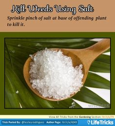Kill Weeds Using Salt  Sprinkle pinch of salt at base of offending plant to kill.  - See more at: http://lifetricks.com/outdoors/gardening/kill-weeds-using-salt/#sthash.VWKZ9kQJ.dpuf| LifeTricks