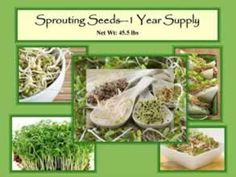 The 1 Year Supply of Sprouting Seeds - The Preparedness Seeds 1 Year Supply of Sprouting Seeds is the most complete and nutritionally dense element of your food storage plan.  Each bucket has a one-year supply of sprouting seeds for one person.