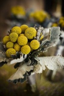 Billy buttons and silver foliage. Billy buttons for Emma's birthday! Yellow Flowers, Beautiful Flowers, Beautiful Bouquets, Wedding Bouquets, Wedding Flowers, Bridesmaid Flowers, Bridesmaids, Billy Balls, Mellow Yellow