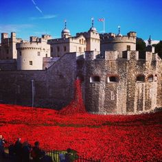 Spilling forth A mass of poppies oozing from The Tower of London.    I want to go there and see this, and photograph it for myself!