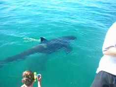 Freakn awesome!  Swimming w/ orcas in New Zealand