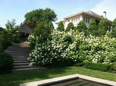 RIDGECREST    Looking to the east house facade from the lower Pool Terrace.  WIld oakleaf hydrangea masses push over the clipped yew hedges.