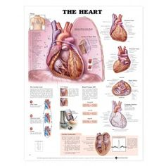 Heart Disease Poster | Heart Pathology Anatomical Chart Company